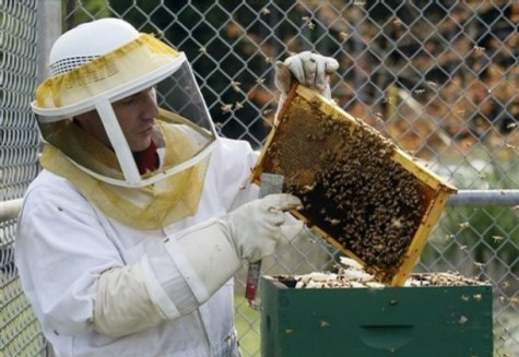 Inmate, Daniel Travatte, tends the Italian honey bees he cares for at the Cedar Creek Corrections Center in rural southwest, WA Credit: John Froschauer/AP