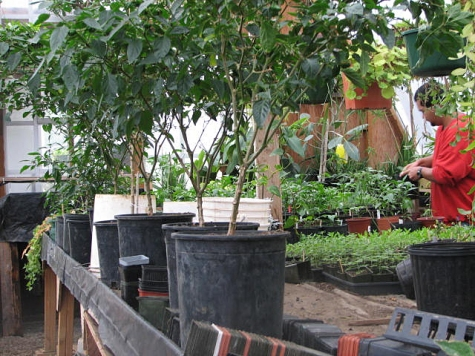 A Cedar Creek inmate and researcher in the Moss-in-Prisons project tends the garden. Credit: Nalini Nadkarni