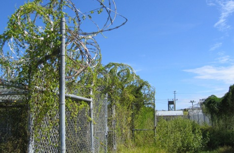 Camp X-Ray, Guantanamo, Cuba. The facility has not been used since early 2002, and recent heavy rains at Guantánamo Bay have brought about overgrowth. Credit: Kathleen T. Rhem