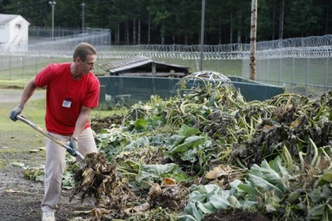 Inmate Robert Knowles pitches plant stalks into a compost pile Oct. 17 at the Cedar Creek Corrections Center in rural southwest Washington. The minimum-security prison has adopted many environmental and cost-saving practices. Credit: John Froschauer/AP Photo.