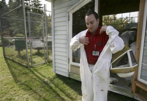 Daniel Travatte, 36, suits up to check on the Italian honey bees he cares for at the Cedar Creek Corrections Center in rural southwest, Wash. on Friday, Oct. 17, 2008. The bees are part of a program to help the prison be more environmentally green. Credit: John Froschauer/AP