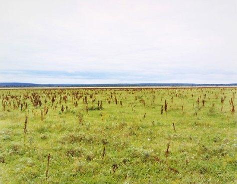 Perm (Grasses), 2001. © Anna Shteynshleyger