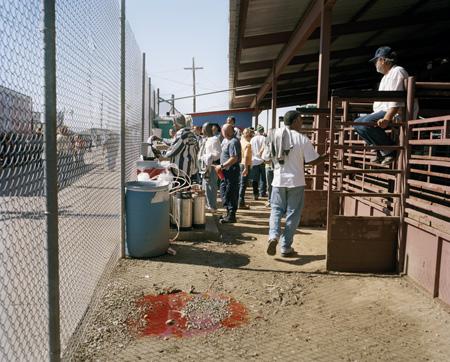 Sarah Stolfa At Angola Prison Rodeo Prison Photography