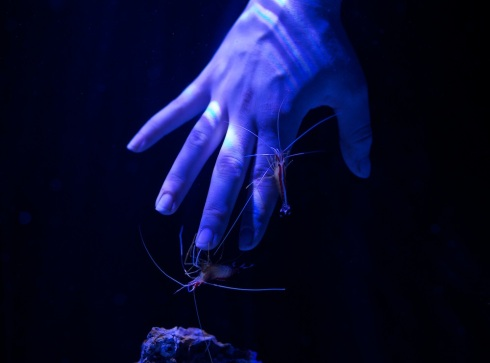 Portland Aquarium opening