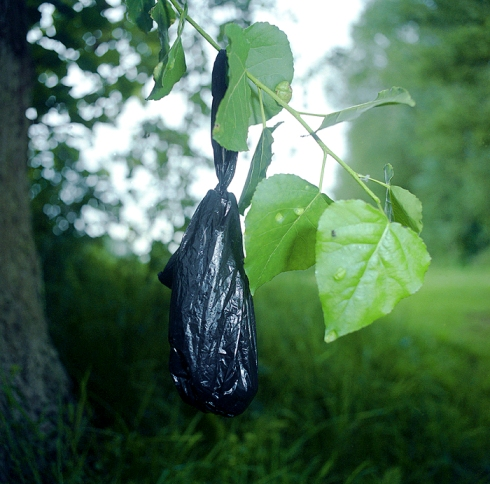Black Bag Hanging