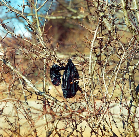Black Bag in Thorn Bush