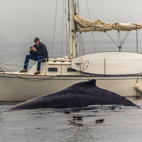 APQ Whale