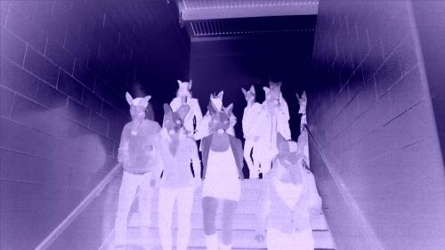 CoyoteStampedeVideoStill copy